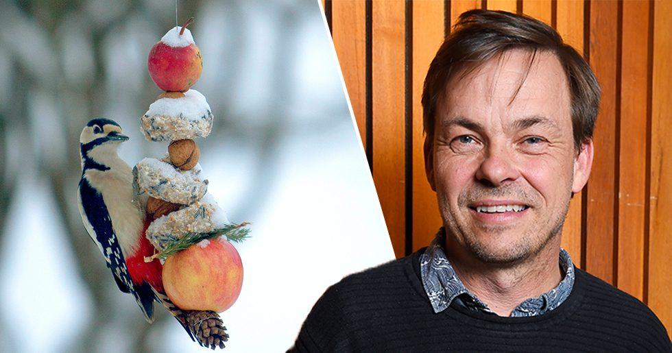 Niklas Aronsson och en hackspett som äter fågelmat.