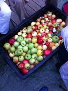 Vi började med att dela äpplena i bitar.