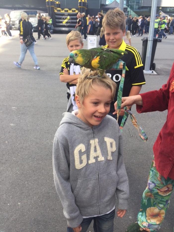 AIK match Alex Watson