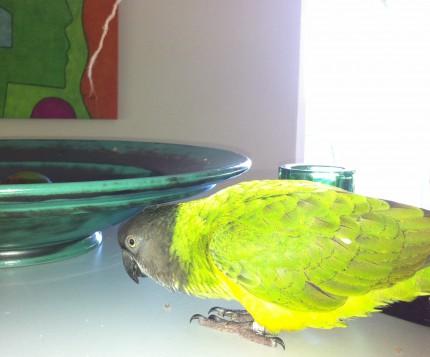 Supersara försvarar brödsmulor på sitt revis, bänken mellan köket och köksbordet....