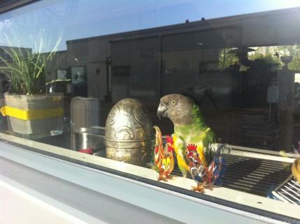 Söta gojan Sara i sällskap med tre påsktuppar och ett silvrigt påskägg.