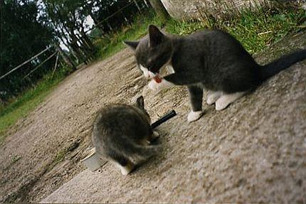 Hemlösa kattungar tvättar sig
