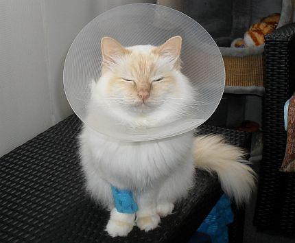katt förstoppning symtom