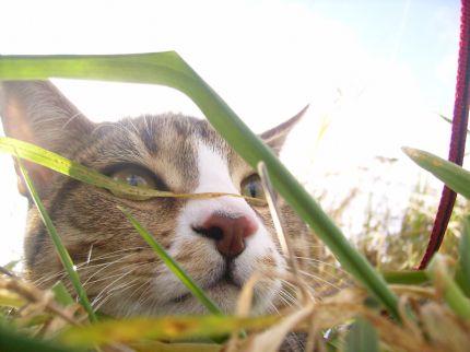 Katten Moltass