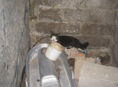 Katt räddad ur källare av hund
