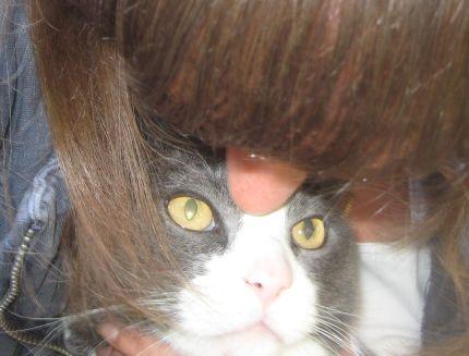Matte pussar sin katt