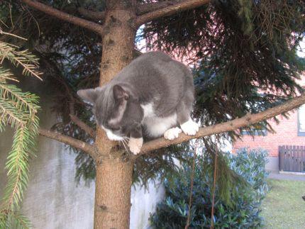 Katt klättrar i träd