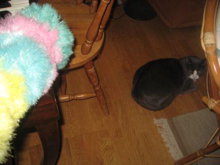 Katt rädd för dammvippa