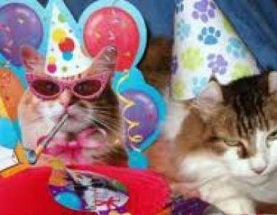 Roliga katter i party-hattar