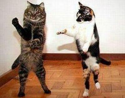 Katter som dansar
