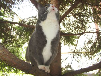 Gråvit katt sitter på en trädgren