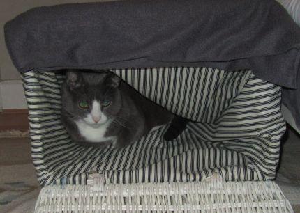 Katt använder tvättkorg som mysplats
