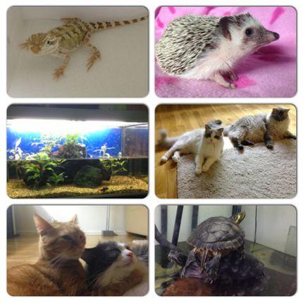 Bilder på ödlor, igelkottar, katter sköldpaddor och fiskar
