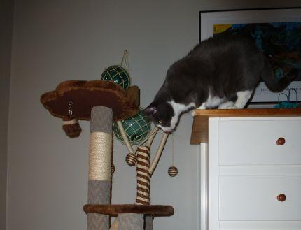 Katt som har kul i sitt klösträd