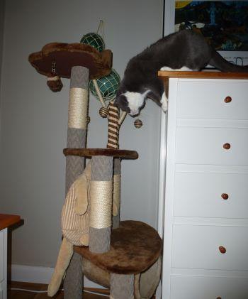 Katt som hoppar i sin klösmöbel