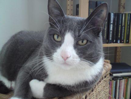 Katten-Frasse-sjuk1