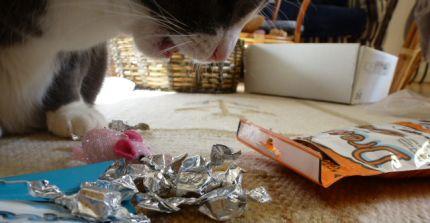 Katten-Frasse-Dreamies4