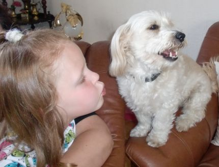 Hunden-Vipsi