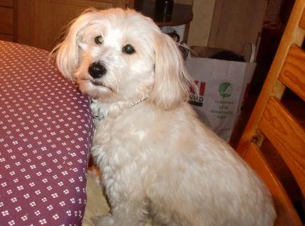 Hunden-Vipsi2