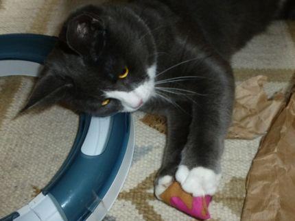 Katten-Tasse-Pelles-myntaleksak