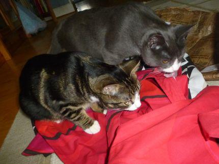 Katterna-Tasse-Simba-Pelles-tygkassar
