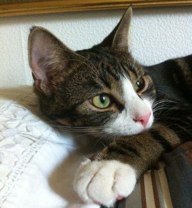 Katten-Simba-i-soffan1