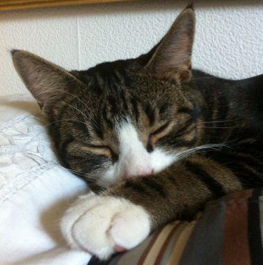Katten-Simba-i-soffan_2