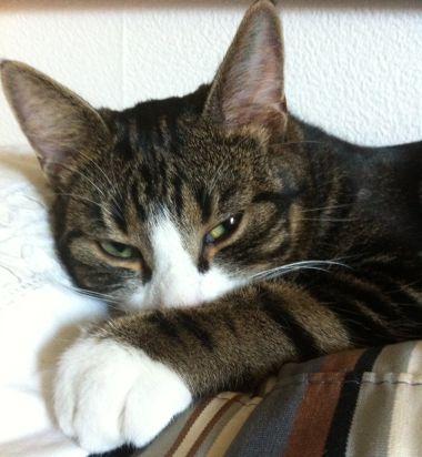 Katten-Simba-i-soffan_3