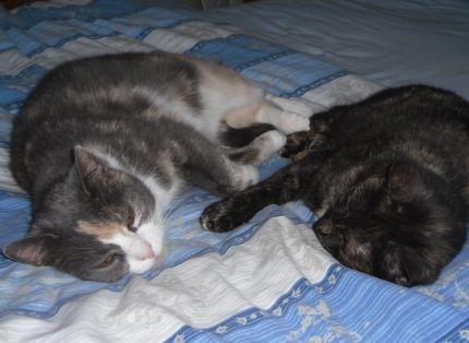 Katterna-Gosan-Tingeling