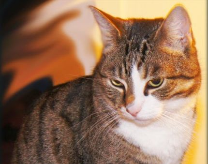 Katten-Piff