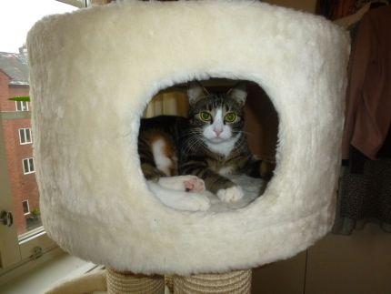 Katt ligger i hus till klösträd