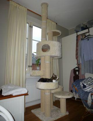Katt i takhögt klösträd