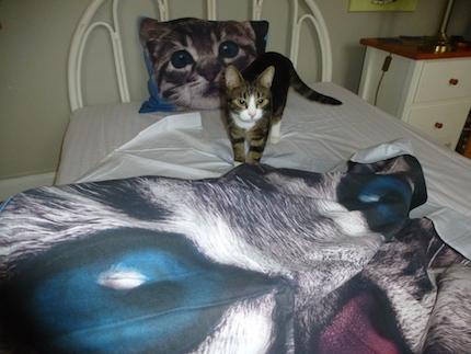Katt bäddar sängen