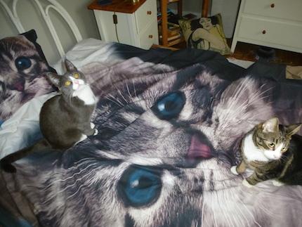 Påslakan med kattmotiv