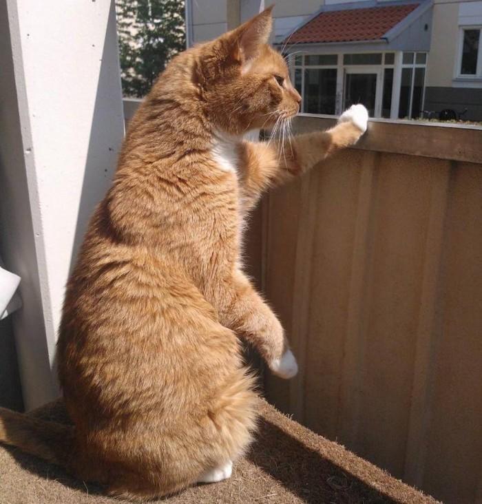 Röd katt på balkong.