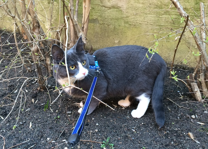 Katt i buske