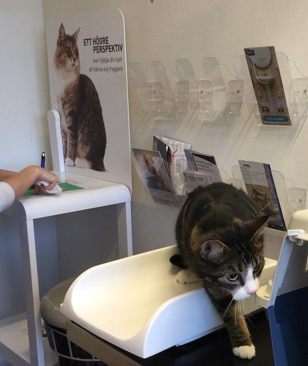 Kolla vikten på katten hos veterinären