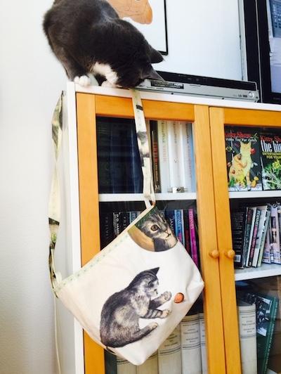 Katter-vaska