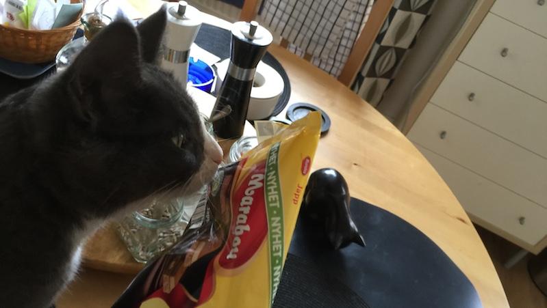 Katt på bordet nosar på Marabou Japp choklad
