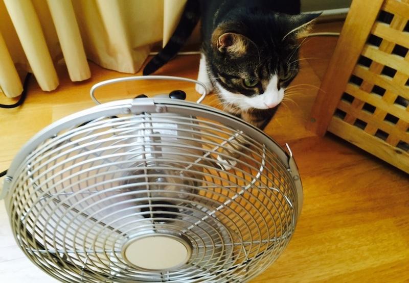 Katt undersöker en fläkt.