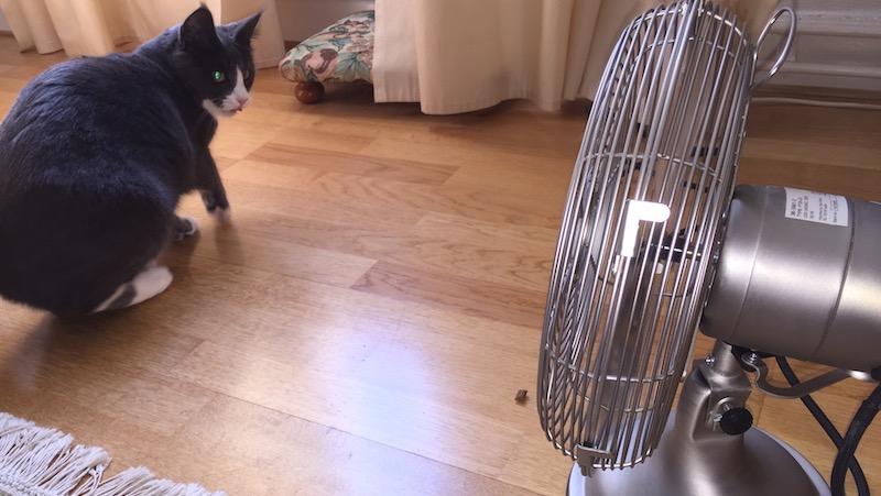 Katt blir rädd för en fläkt.