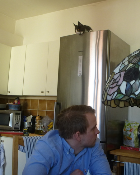 Katt ligger ovanpå kylskåpet.