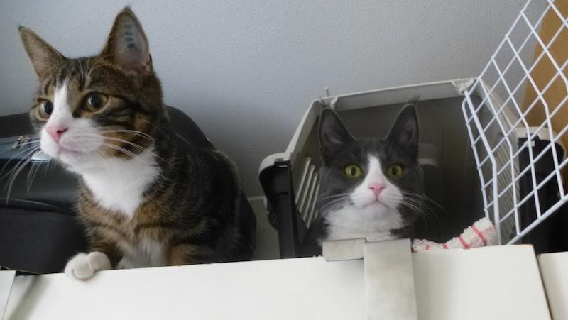 Katter högst upp på garderoben