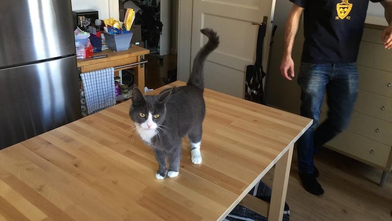 Katt på bordet.