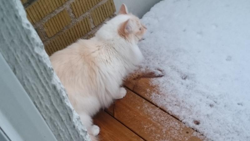 Katt-balkong-vinter
