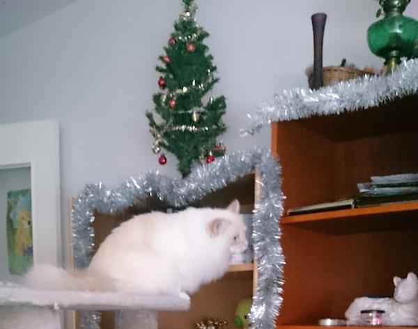 Katt-jul-pynt