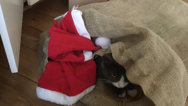 Katt i tomtens säck