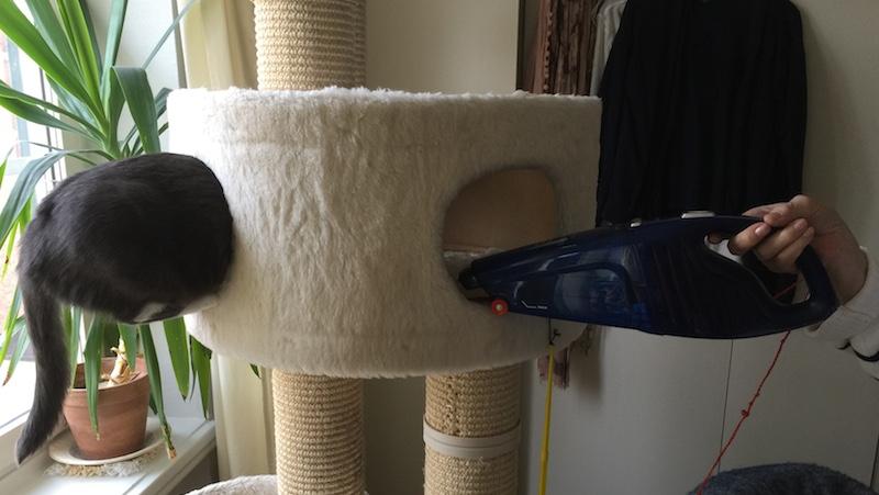 Katt i klösträd med handdammsugare