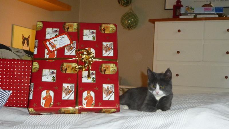 Kattunge bredvid jättestor julklapp