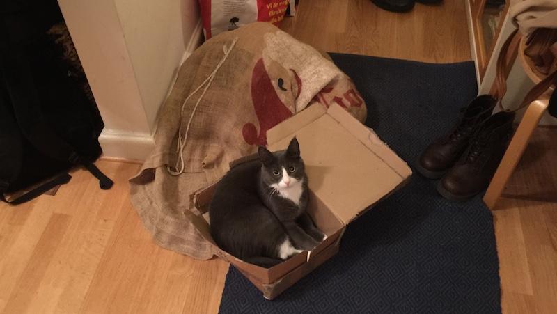 Katt ligger i liten låda